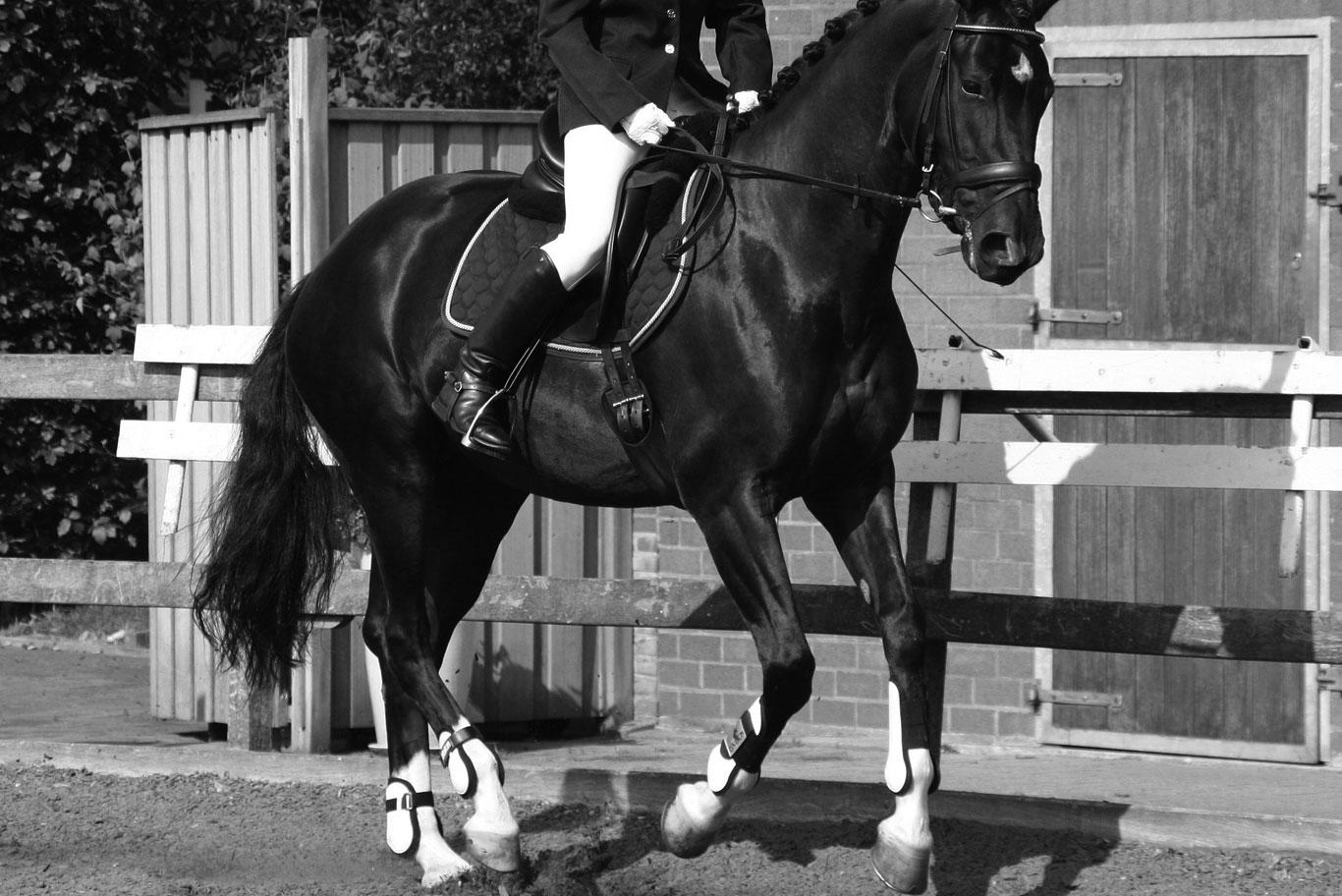 Sunday 17th September 2017 - White Horse Farm Equestrian Centre