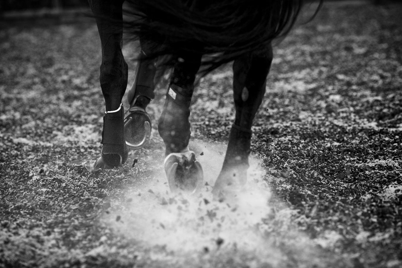 Sunday 16th July 2017 - White Horse Farm Equestrian Centre